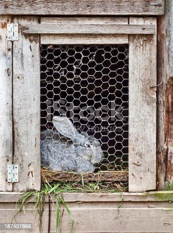 grey rabbit in wooden cage
