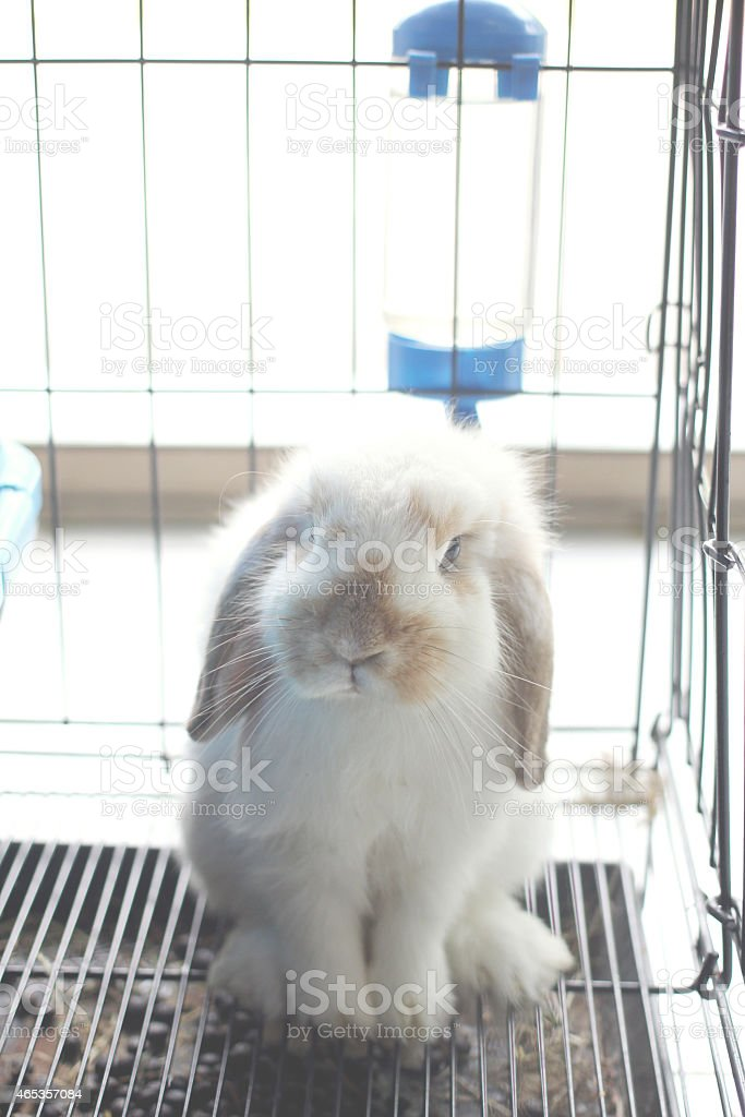 rabbit in cage stock photo