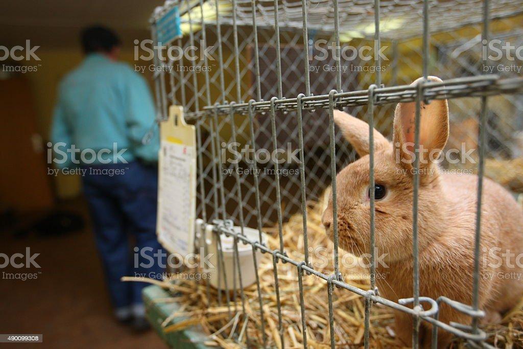 Rabbit in cage stock photo