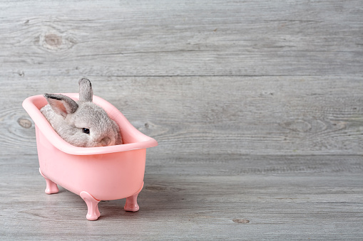 istock Rabbit in the bathtub placed on a wooden floor. Happy Easter Fancy rabbit on a wooden background. Cute little rabbit on a pink bathtub. Rabbit that is cute and precise according to breed standards 1128862370