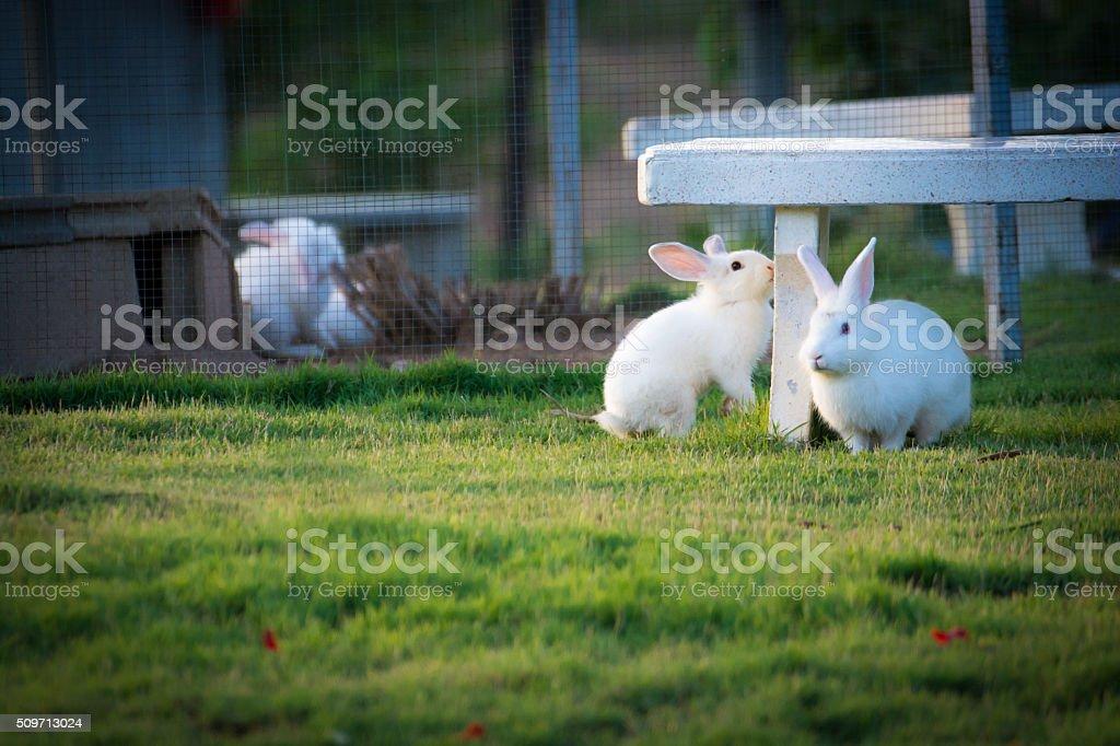 Rabbit in the Garden stock photo