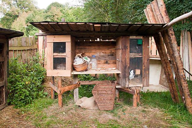 Kaninchen in hutch – Foto
