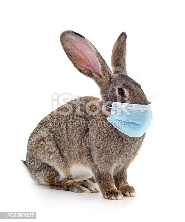 Rabbit in medical mask isolated on a white background.