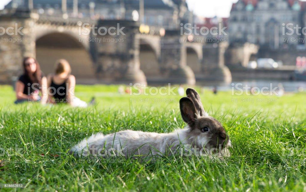 Rabbit in the park of Dresden stock photo