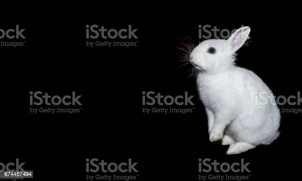 Rabbit isolated on a black background picture id674457494?b=1&k=6&m=674457494&s=612x612&h=9pa4n09x6qpniqtapvy67easzlcsnjatxmpn2bill a=