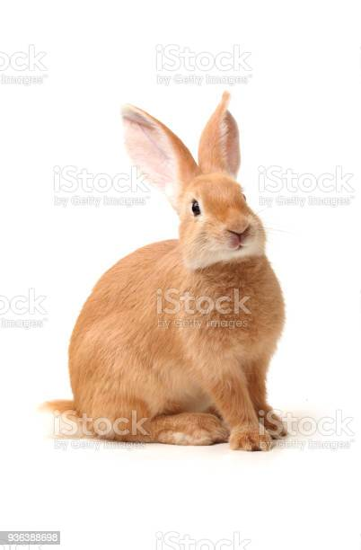Rabbit isolated on white background picture id936388698?b=1&k=6&m=936388698&s=612x612&h=zxy7d5yu1bgxuujqks0wlebkenvjcgxv4v43hazuvlc=