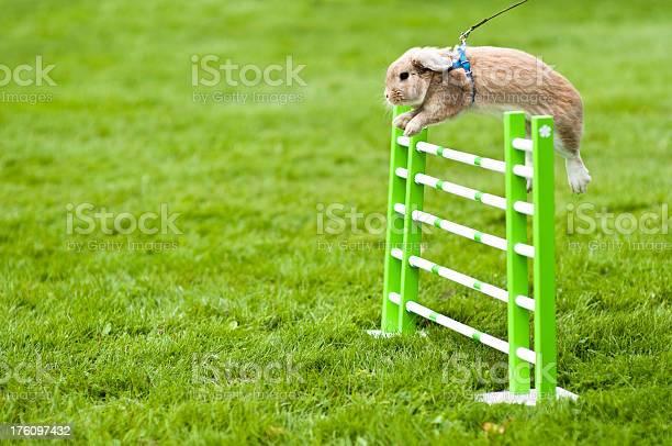 Rabbit jumping picture id176097432?b=1&k=6&m=176097432&s=612x612&h=n 8ptpaeovkmf ogza9epqv13omybwxs8gxypmonxfq=