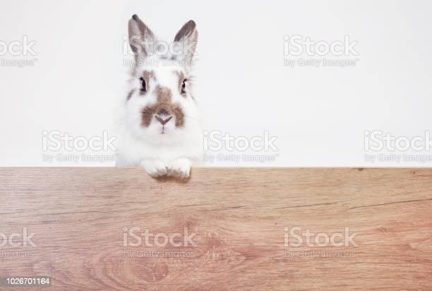 Rabbit looks at wood copy space picture id1026701164?b=1&k=6&m=1026701164&s=612x612&h=9yvm uzazrcginyaj2lt1ashgv9qdm7lw3vam6hxzrm=