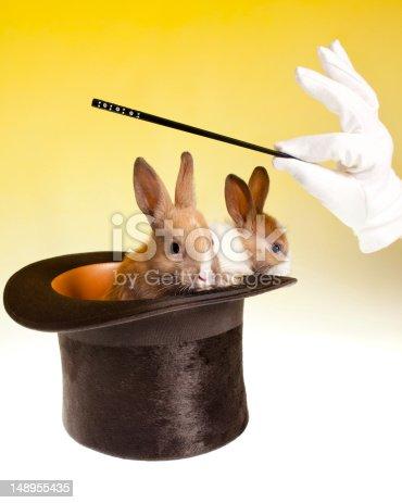 istock Rabbit magic trick in top hat 148955435