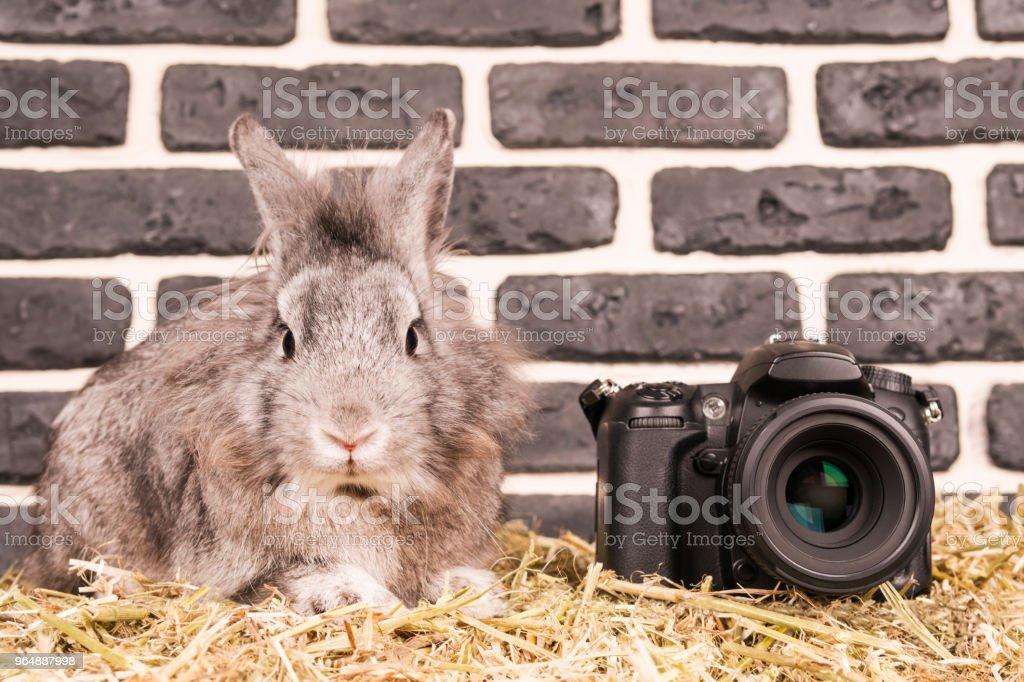 Rabbit next to the camera royalty-free stock photo