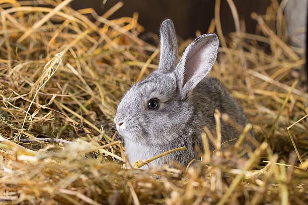 토끼 켜기 스톡 사진