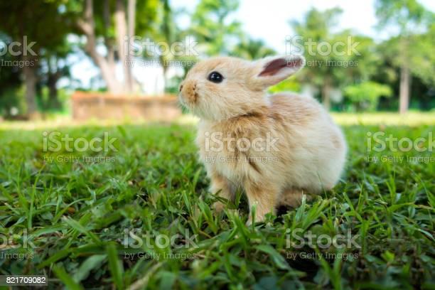 Rabbit on green grass picture id821709082?b=1&k=6&m=821709082&s=612x612&h=vv86hdrds6egey fcvbozc4ueeelx8pyhqqpwsc8 f4=