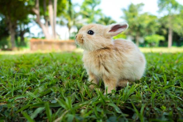 Rabbit on green grass picture id821709082?b=1&k=6&m=821709082&s=612x612&w=0&h=ilc4ccxb1xdktv vypyo wjxykzcfilkhmehonaqxi0=