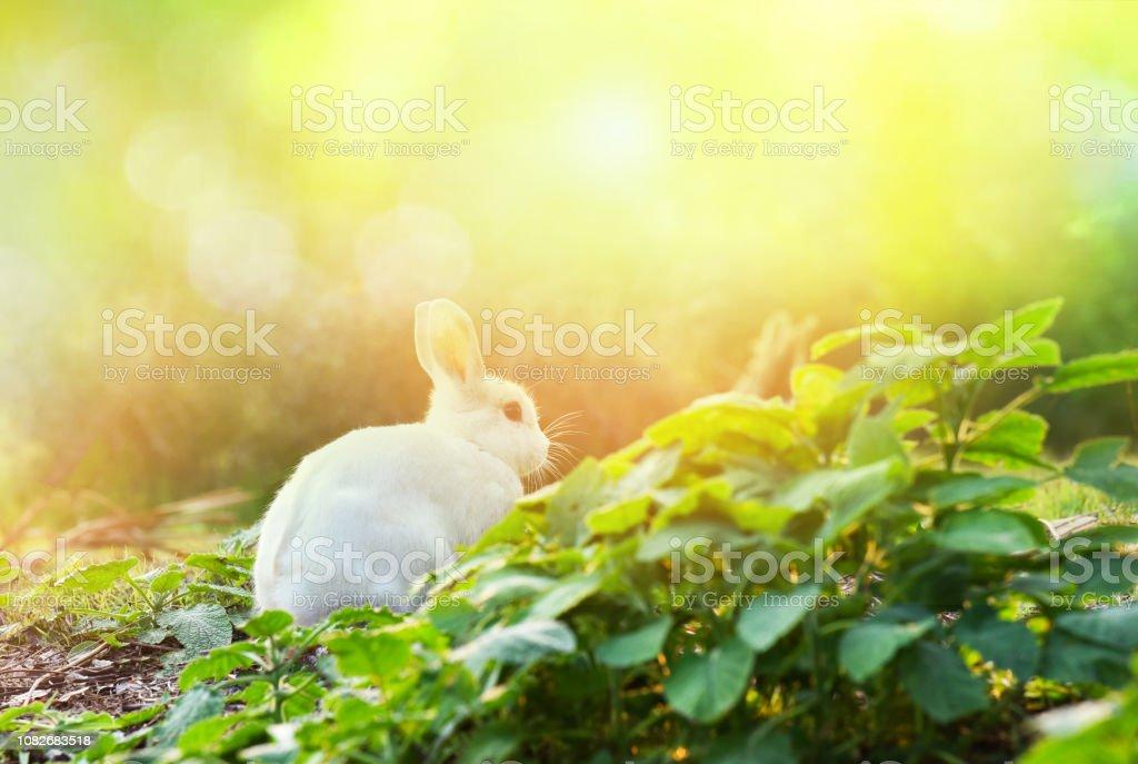 Rabbit On Nature Cute Little White Rabbit Garden Spring Green