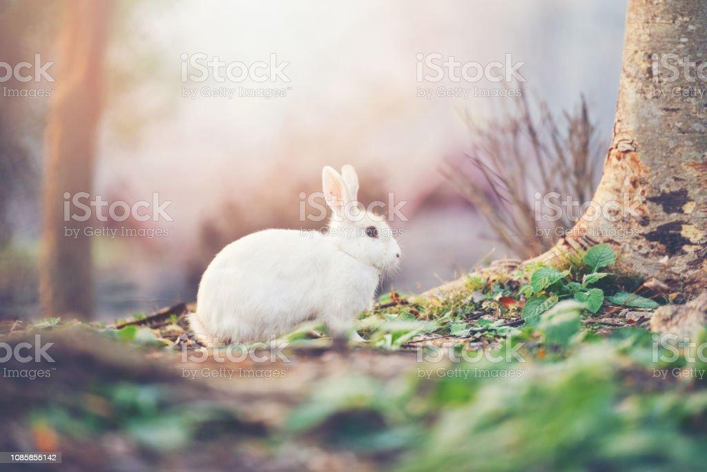 Rabbit On Nature Cute Little White Rabbit On Autumn Garden Nature