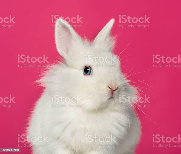 Rabbit on pink background picture id485999565?b=1&k=6&m=485999565&s=612x612&h=ia7rkalng9ofdf trqcvdrxc2aunnp8hf5pq9sdo054=