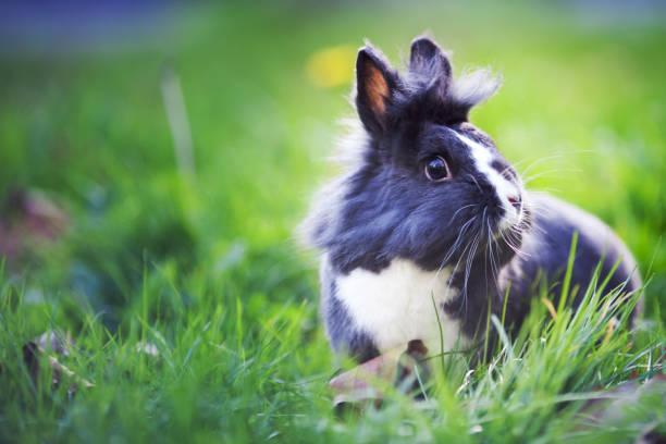 Kaninchen auf der Wiese – Foto