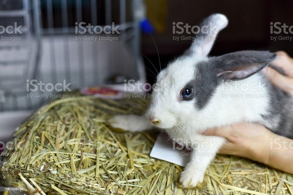 Kaninchen auf ihren Trockenrasen Essen, graue gesunde Häschen und frische Ernte Stroh Heu, Nagetier Tier Haustier sitzt. – Foto