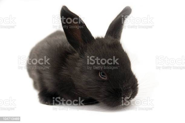 Rabbit picture id104713469?b=1&k=6&m=104713469&s=612x612&h=xsqa 9inlq yfwoyyboag3xu tfd2bhoowr8ftd ojk=