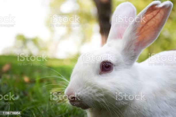 Rabbit picture id1156716954?b=1&k=6&m=1156716954&s=612x612&h=wc4cybvxldd3kldv5bwdfvrzs6pqwvy6od3ppzsmnjq=