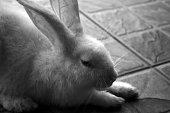 A lying rabbit.