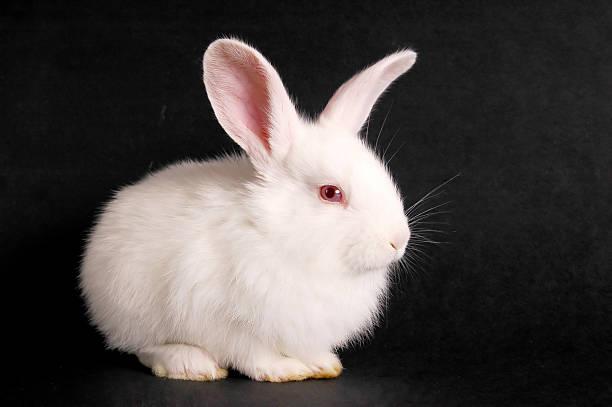 Kaninchen – Foto