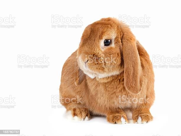 Rabbit picture id153780732?b=1&k=6&m=153780732&s=612x612&h=oxboe0ix8rubq59rfby1nkyxguzpef4slyzurm6snzq=