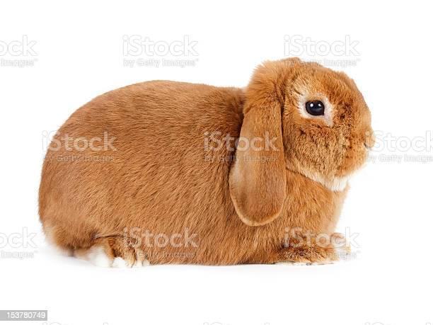 Rabbit picture id153780749?b=1&k=6&m=153780749&s=612x612&h=aq7upxwc9xmtyhnf0p6y3 m2vmbwqisggad1agxlkew=