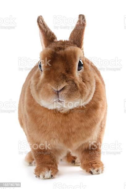 Rabbit picture id153780785?b=1&k=6&m=153780785&s=612x612&h=hvwz7fkcbrabxig3bbw3twhwcukwqmodbww6ydlaxc8=