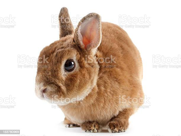 Rabbit picture id153780969?b=1&k=6&m=153780969&s=612x612&h=g3ipoqh btri490fxd55rypfwff1fsedvzlz3vl3fqy=