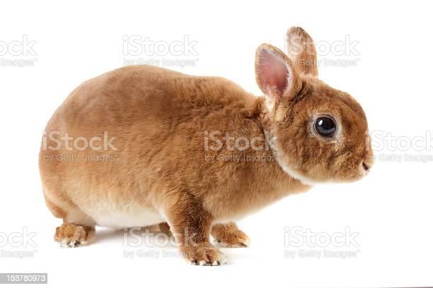 Rabbit picture id153780973?b=1&k=6&m=153780973&s=612x612&h=wubtlg0tarlhp cldimestww7ienh 6aocgftjq4wka=