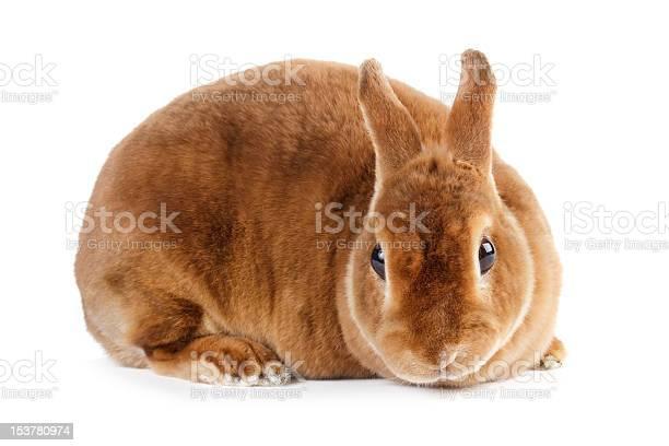 Rabbit picture id153780974?b=1&k=6&m=153780974&s=612x612&h=3meuhetfbfwxrxlofcypj5tfe rqdkowkwtjn2ufs18=