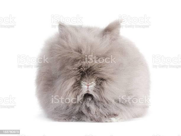 Rabbit picture id153780975?b=1&k=6&m=153780975&s=612x612&h=lolnwe6cnufc4ae2co9mpch9ubueednamvmxp6wn kk=
