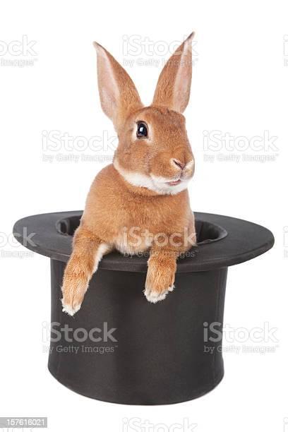 Rabbit picture id157616021?b=1&k=6&m=157616021&s=612x612&h=qeejdj90szsy9cce7 08fka1vx6d iku aq9ep9b0uw=