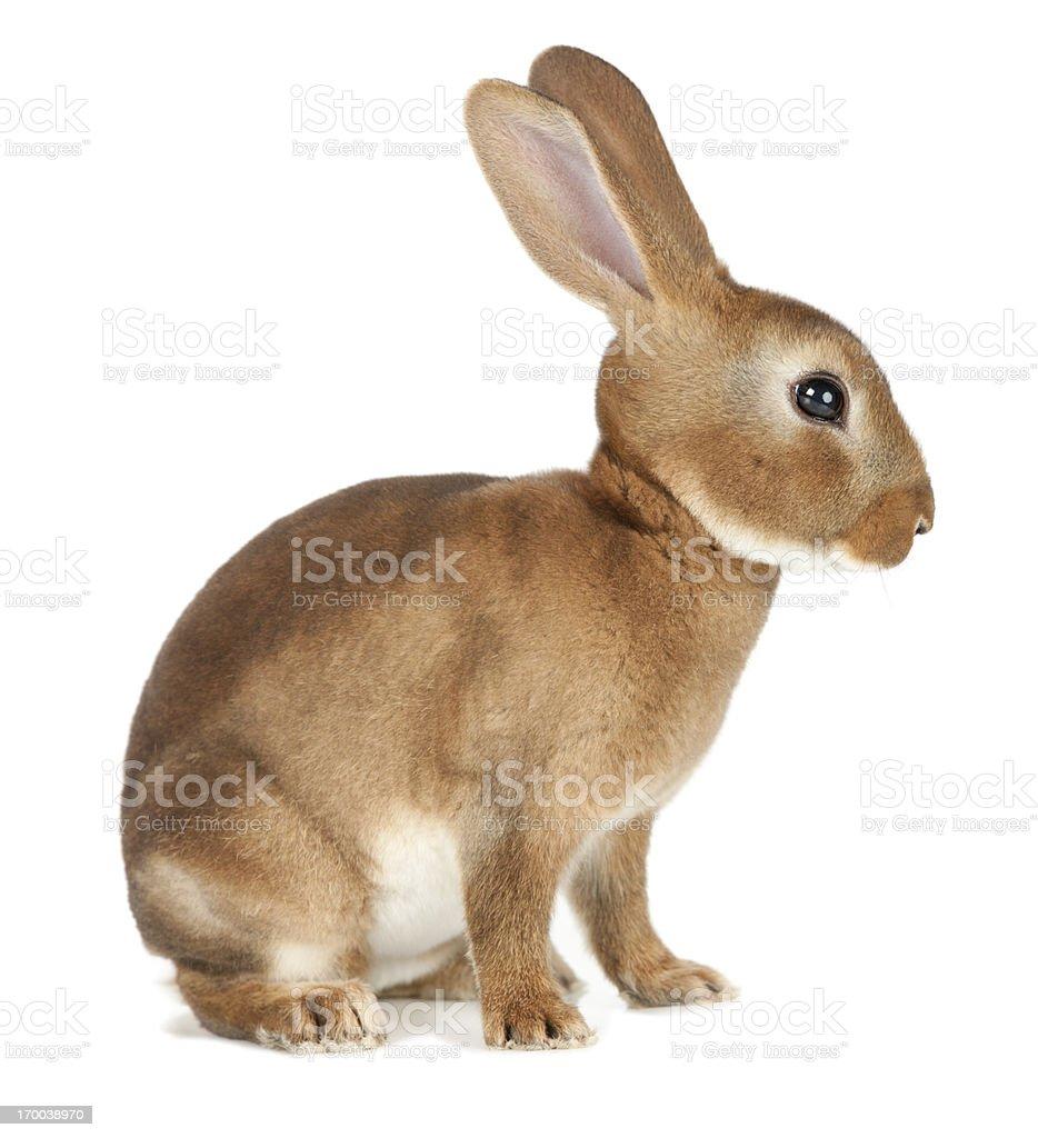 Rabbit stock photo