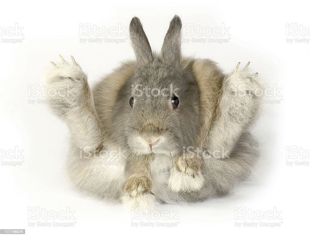Rabbit Funny rabbit on white background. Isolated. Easter bunnyRabbit series: Animal Stock Photo