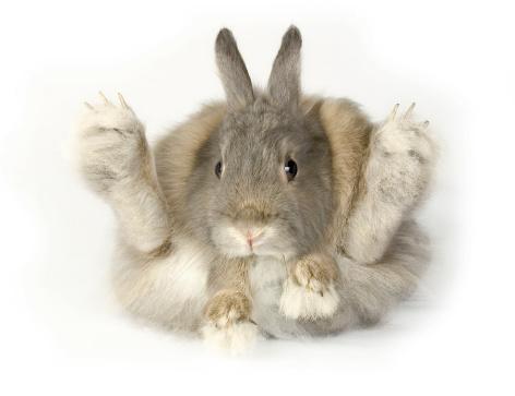 Rabbit Stock Photo - Download Image Now