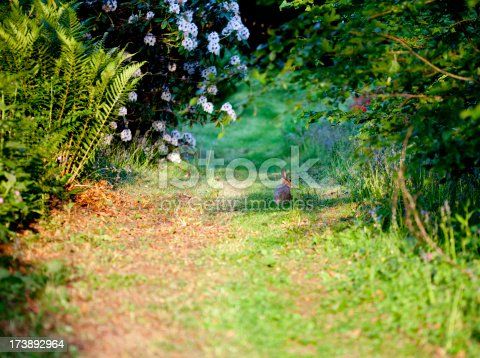 rabbit in the countryside
