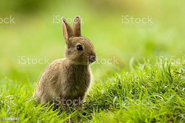Rabbit picture id173893247?b=1&k=6&m=173893247&s=612x612&h=0tcvqalufaszi77ewht 65vlzzt90tazqsnhvkiruf8=