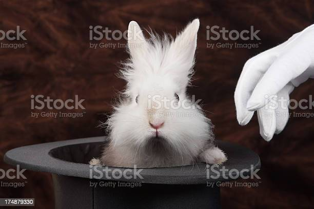 Rabbit picture id174879330?b=1&k=6&m=174879330&s=612x612&h=eegjqhbzf5yhxkwfynvzknfkgagm9z2ytljp6cgbrum=