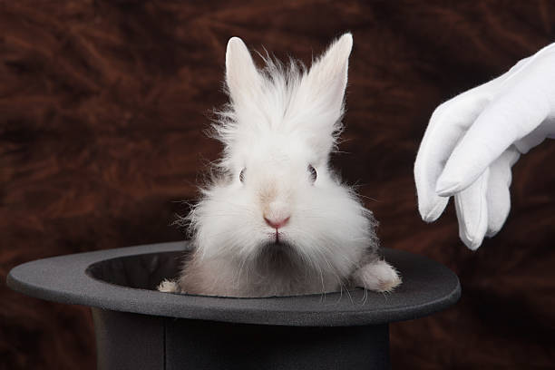 rabbit - magician stock photos and pictures