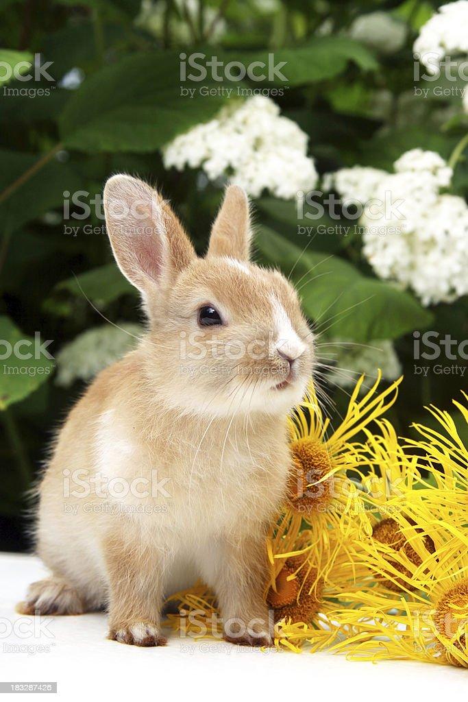 Rabbit. royalty-free stock photo