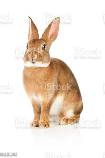 Rabbit picture id183419410?b=1&k=6&m=183419410&s=612x612&h=zssg jfrbinolocchxzkssdp4ztr54zzx0hqlhp2iok=