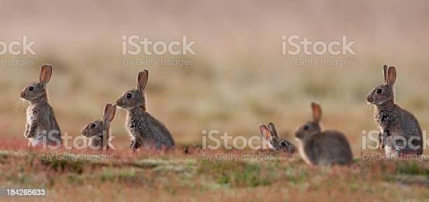 Rabbit picture id184265633?b=1&k=6&m=184265633&s=612x612&h=mvbd6bqybq2i09zxzkdlotxdbzvxxlpykjgfpcokbjo=