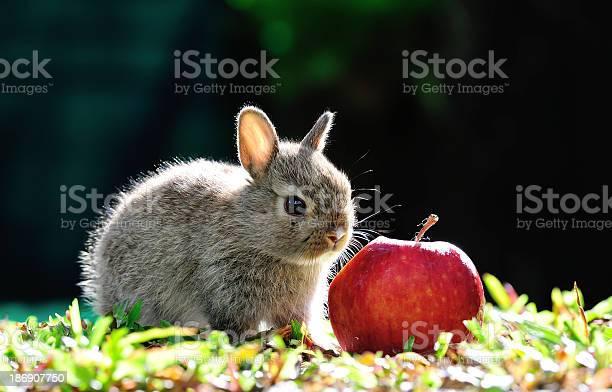 Rabbit picture id186907750?b=1&k=6&m=186907750&s=612x612&h=eyeb2 r7x1k6svbtf53d zlex7ecekgq5wptyokiqvg=
