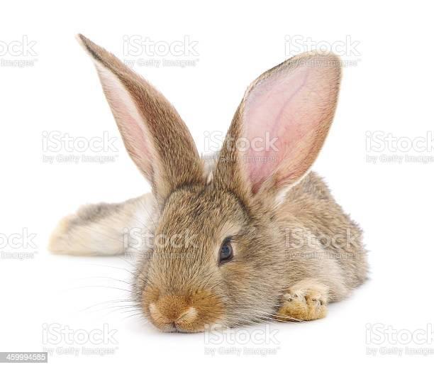 Rabbit picture id459994585?b=1&k=6&m=459994585&s=612x612&h=ttvmo3h4frs9r7argssrlv069hmdzwdjmzgnbmdhs y=