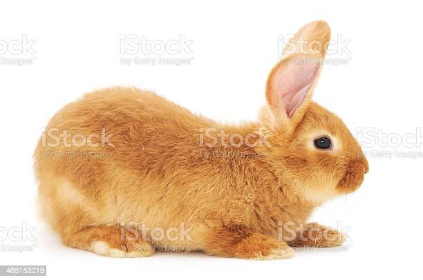 Rabbit picture id465153219?b=1&k=6&m=465153219&s=612x612&h=fexe0kiph54cg6r31t8vip32rmeoqfq mmr3o7vc38i=