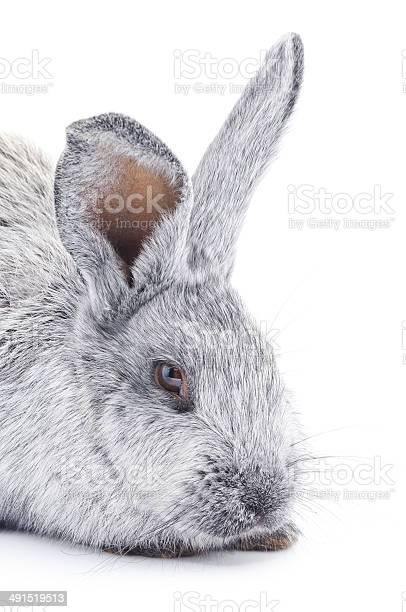 Rabbit picture id491519513?b=1&k=6&m=491519513&s=612x612&h=z6ytwqvrmculde g6ihjqtqrn ppotqoip8495d0avs=