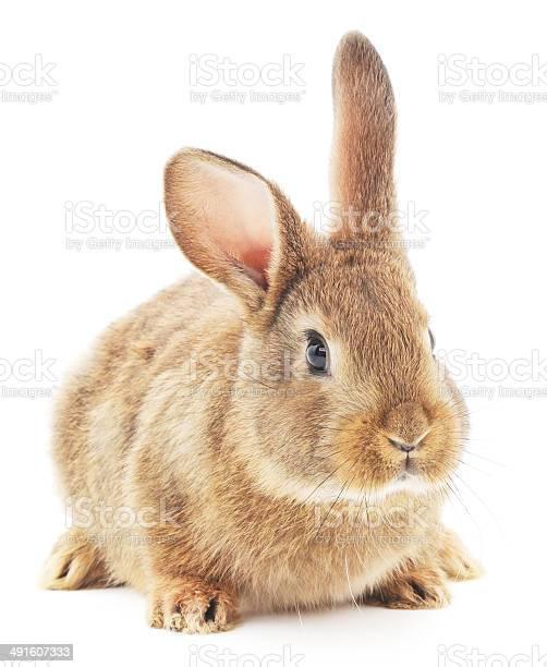 Rabbit picture id491607333?b=1&k=6&m=491607333&s=612x612&h=47mfjfbsr99ay z1e5uevgau0khmw6ewe8s5jafiuwc=