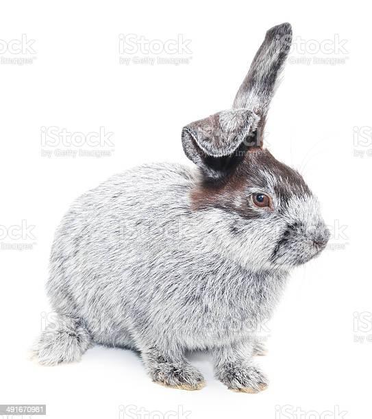 Rabbit picture id491670981?b=1&k=6&m=491670981&s=612x612&h=2ndaz6mdbhqa9oftmtywczzugdjeczphg6giplatcwy=